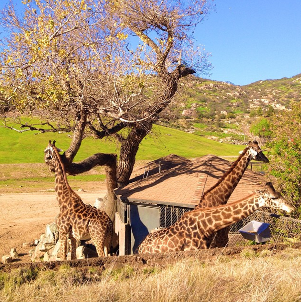 San Diego-Safari Park