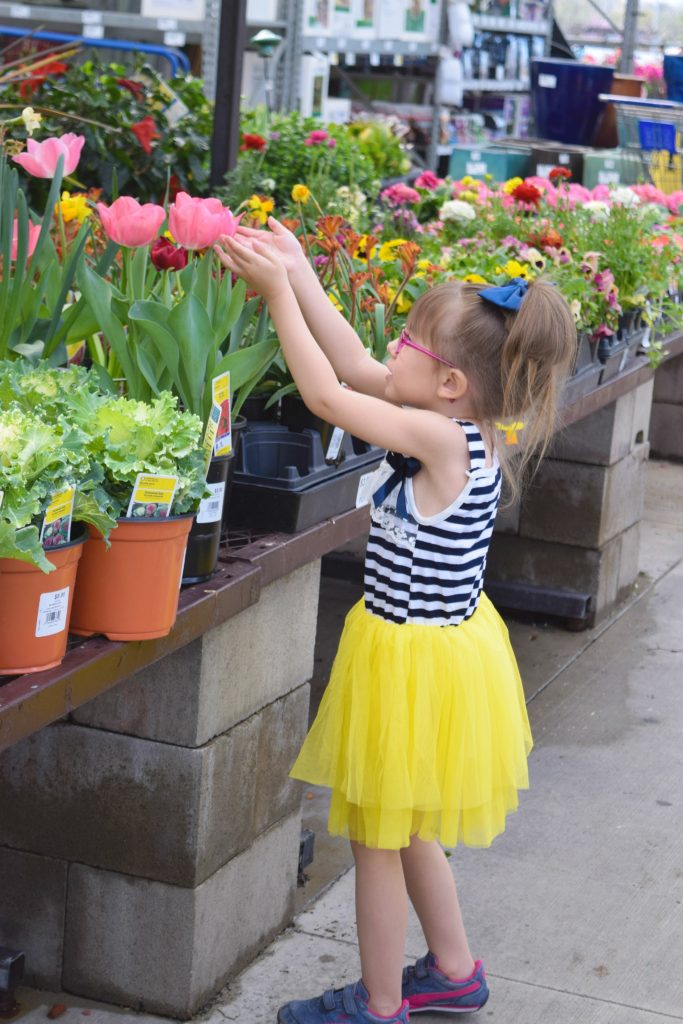 Tulips-Spring 2016-Plant-Toddler
