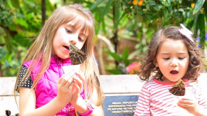 Butterfly-Jungle-2019-San Diego Zoo-Safari Park-Spring Break