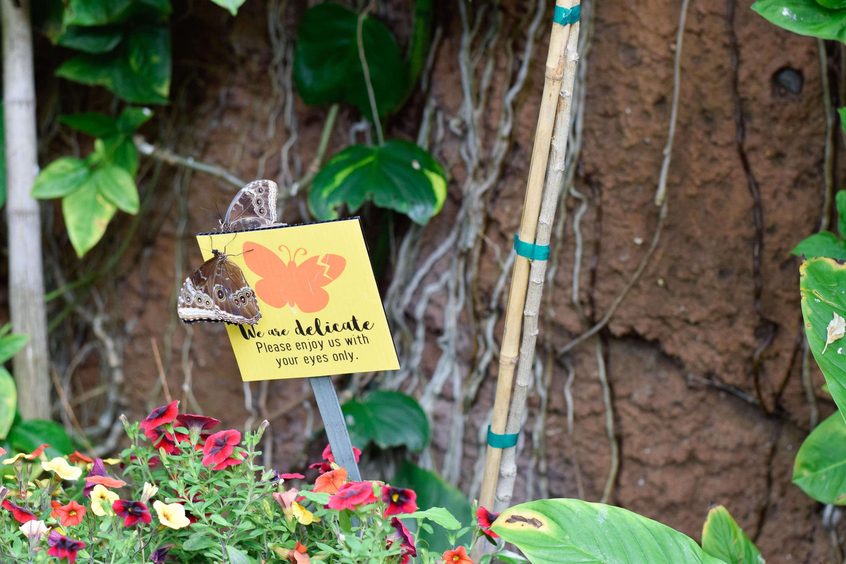 Butterfly-Jungle-2018-San Diego Zoo-Safari Park-Spring Break