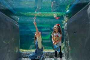 The-Aquarium-of-the-pacific-Visit-Long-Beach-CA-Family Vacation-Travel with kids