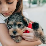 Tips When Adding A Puppy To The Family