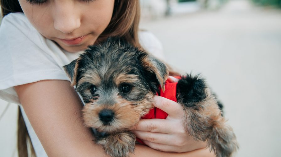 Tips when getting new puppy-yorkie-quarantine-Dog Muffin Recipe eggless